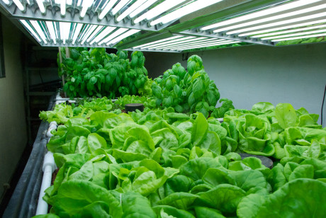 How Plant Growth Can Be Improved Using Grow Lights