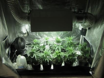 Indoor Grow Tents & Grow Tents: Brief Overview Of Grow Tent Benefits u2013 Ponds Plus Grow ...