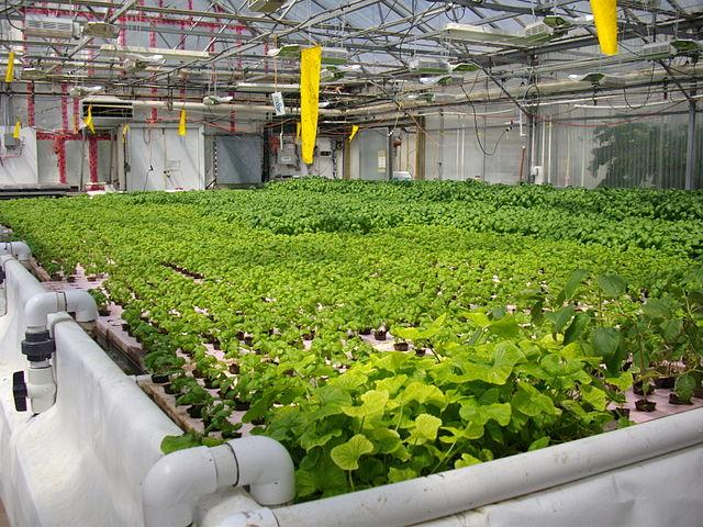 hydroponic indoor garden