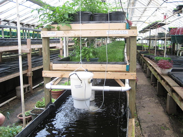 Indoor Ponds With LED Grow Lights For Plants
